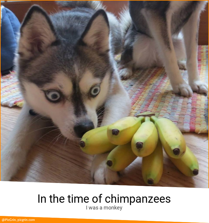 In the time of chimpanzees
