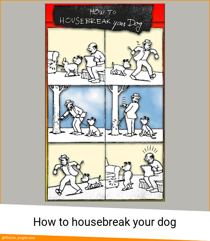 How to housebreak your dog