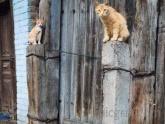 Gatos de Fu