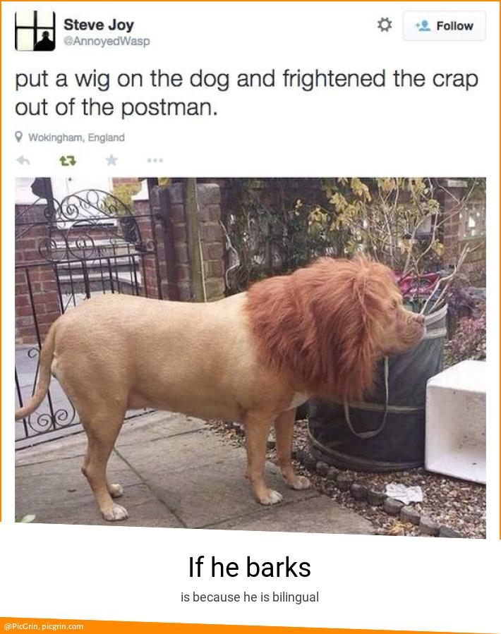 If he barks