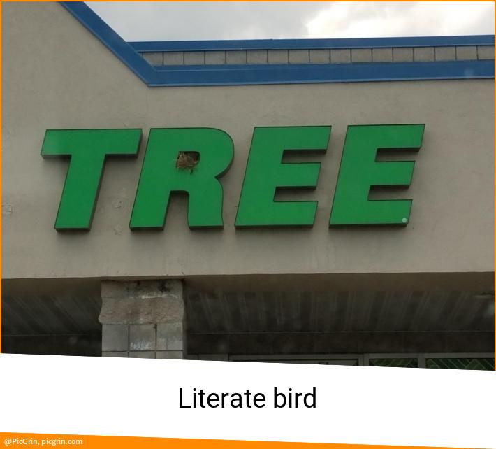Literate bird
