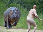 Un hipopótamo albino!