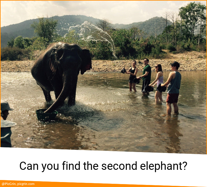 Can you find the second elephant?