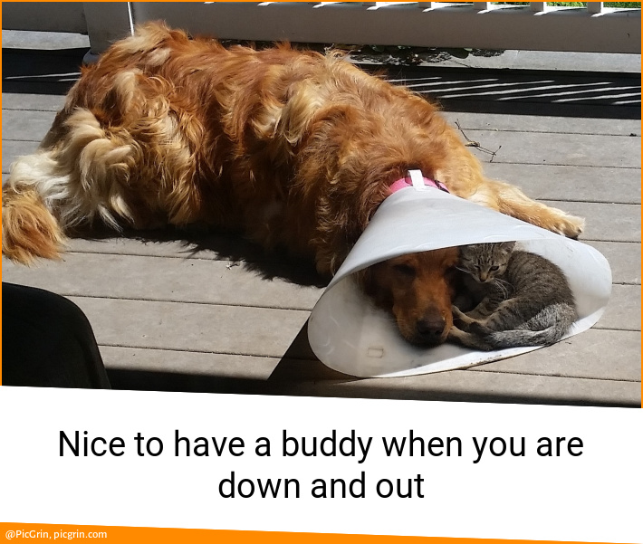 Nice to have a buddy when you are down and out