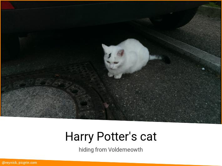 Harry Potter's cat