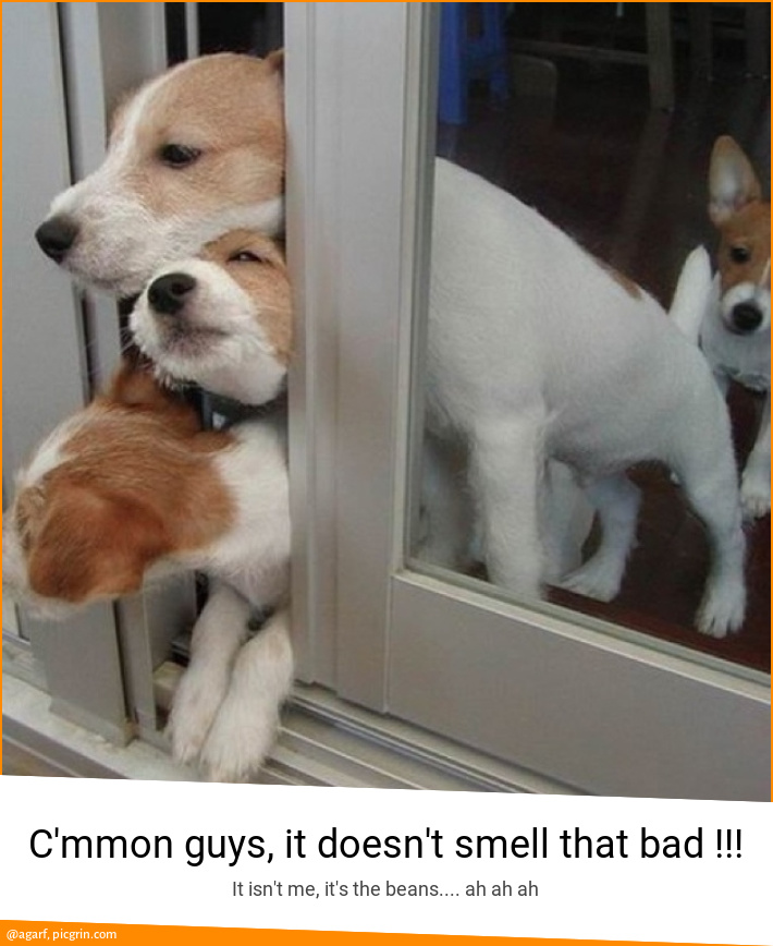 C'mmon guys, it doesn't smell that bad !!!