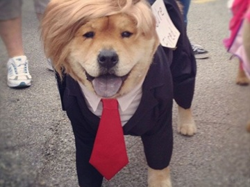 I'm Dognald Trump