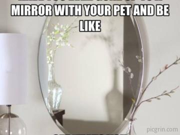 Cats mirror