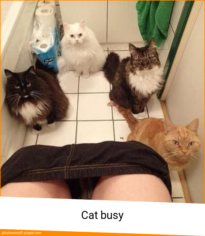 Cat busy