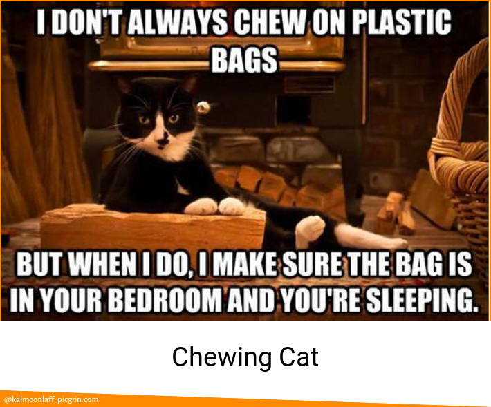 Chewing Cat