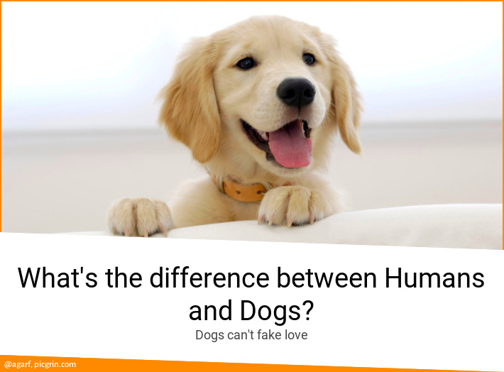 What's the difference between Humans and Dogs?