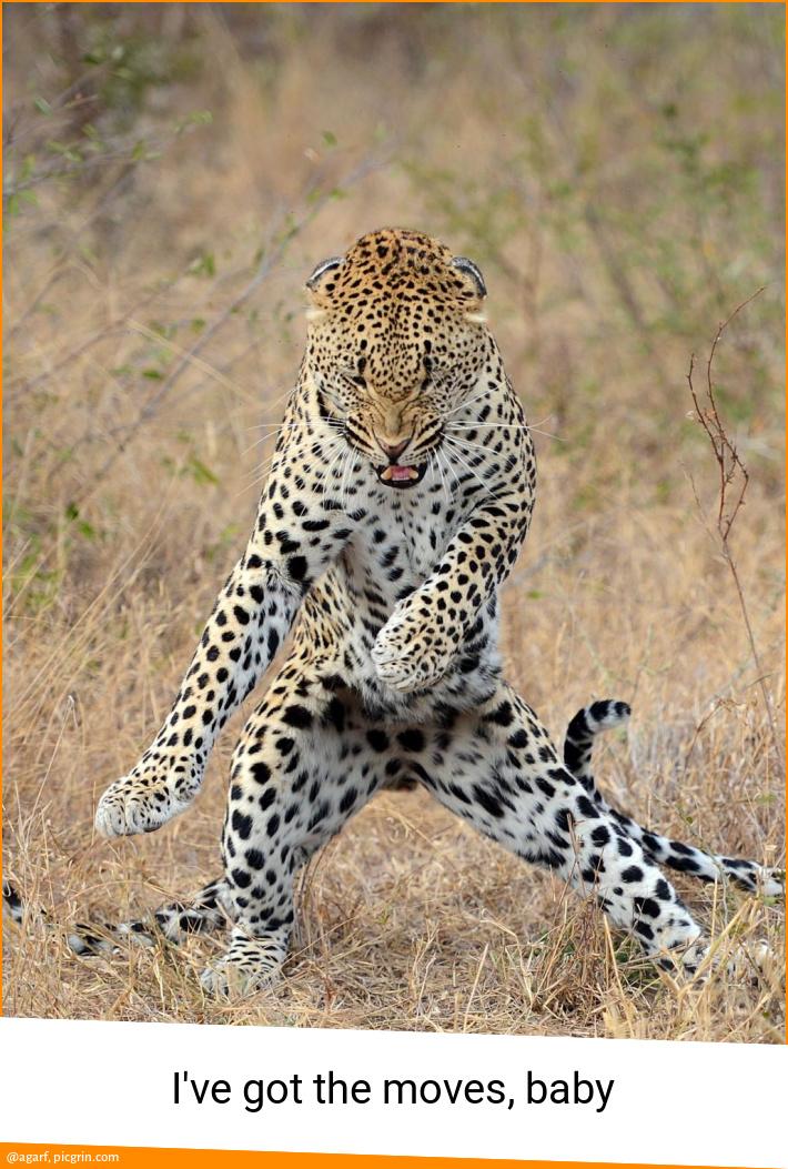 I've got the moves, baby