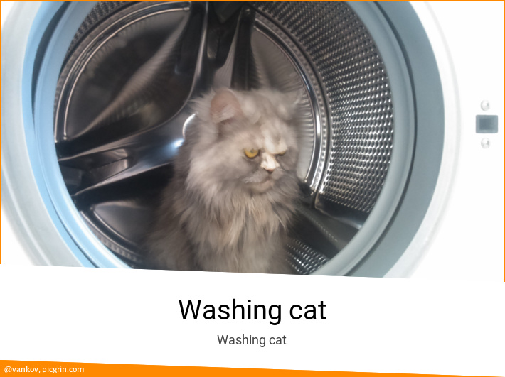 Washing cat