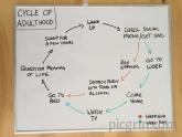 Cycle of adulthood