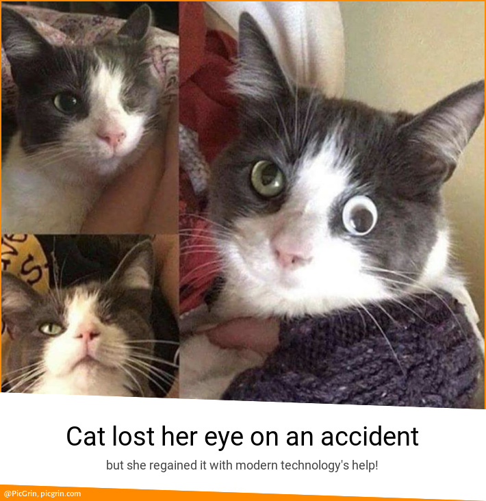Cat lost her eye on an accident