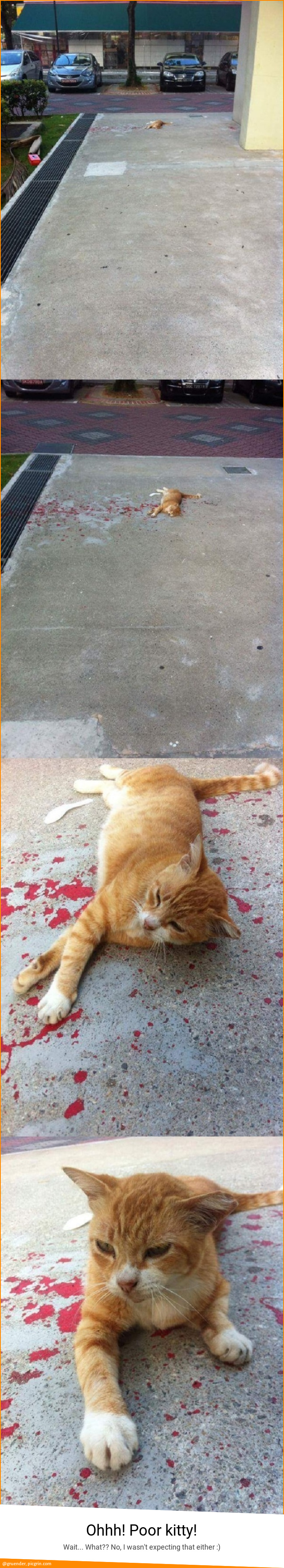 Ohhh! Poor kitty!
