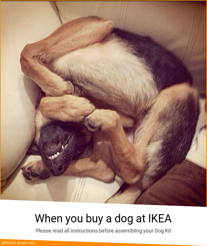 When you buy a dog at IKEA