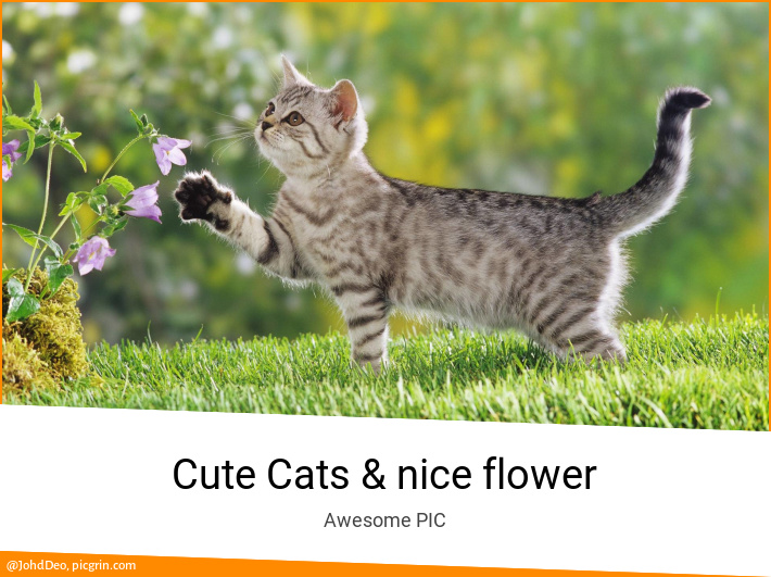 Cute Cats & nice flower