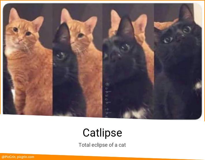 Catlipse