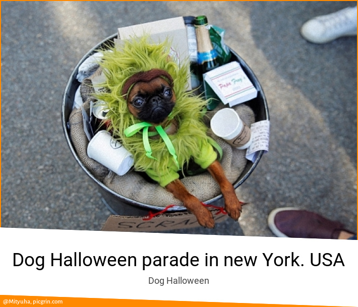 Dog Halloween parade in new York. USA