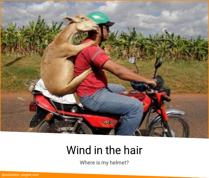 Wind in the hair