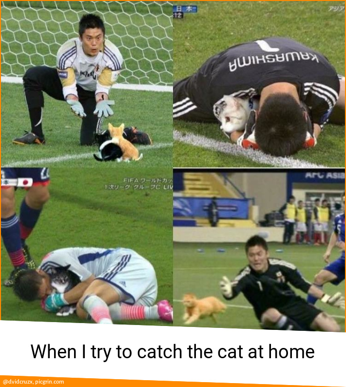 When I try to catch the cat at home
